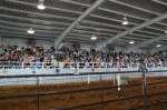 Crowd waits fot the Jousting to start