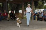 Brenda and Max compete in the dog show